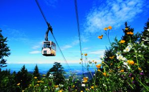 15 x 2 ascents and descents with the Schauinslandbahn (valid for the year)
