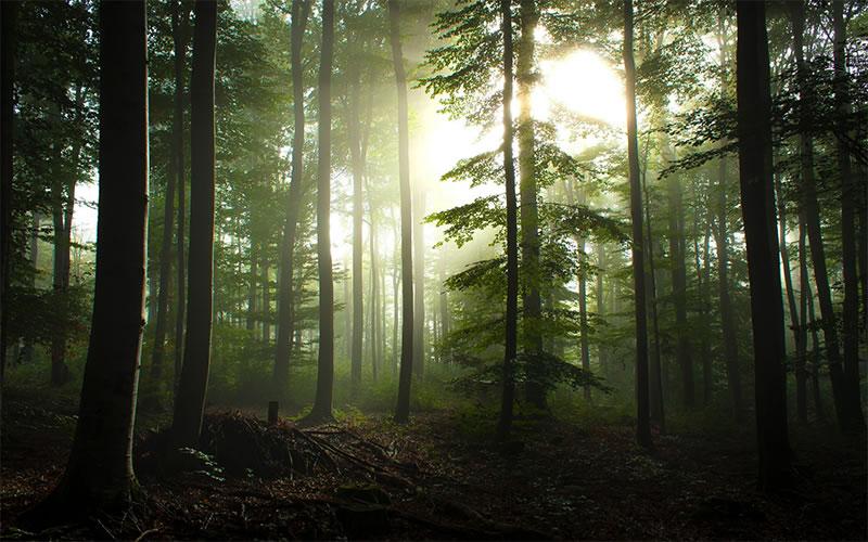 Black Forest Tourism